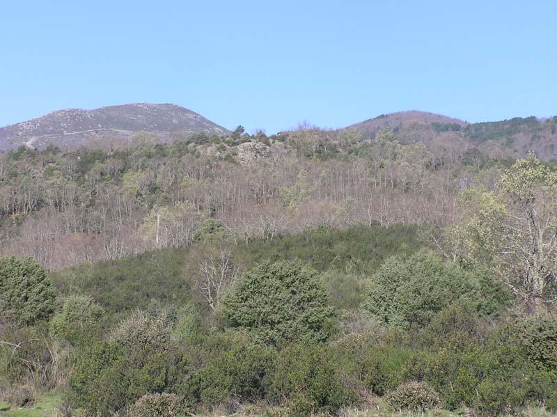 foliacion robles